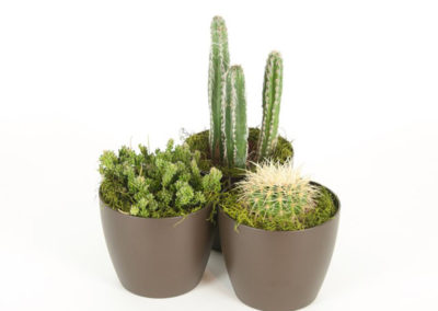 Cactus Assorted
